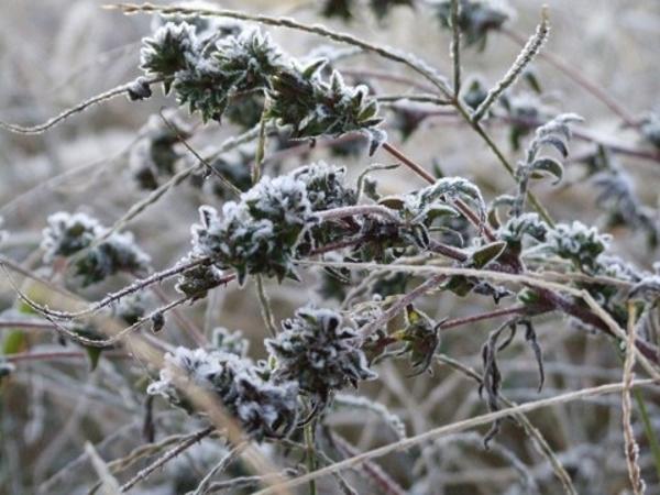 秋が過ぎ去り、初霜が降りる11月。