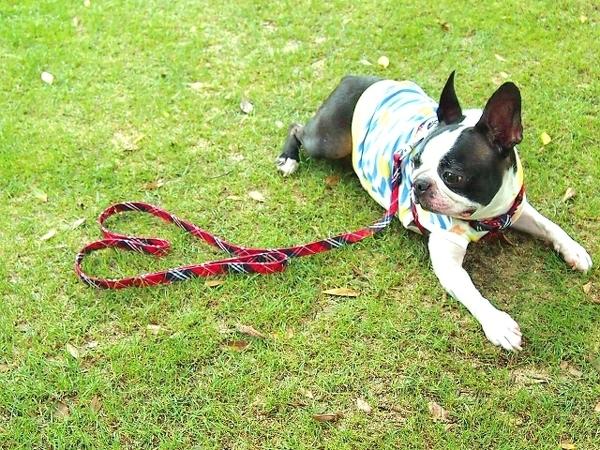犬の散歩に見せかけて、実はナンパだった?