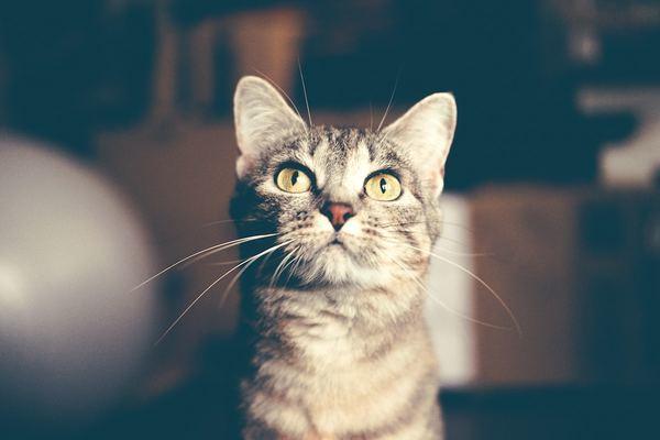 ネコについてわかったこと