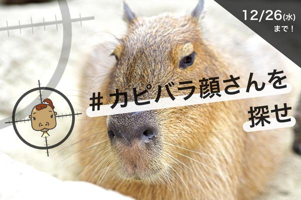 動物公園ご招待券、またはAmazonギフト券が当たる!プレゼントキャンペーン
