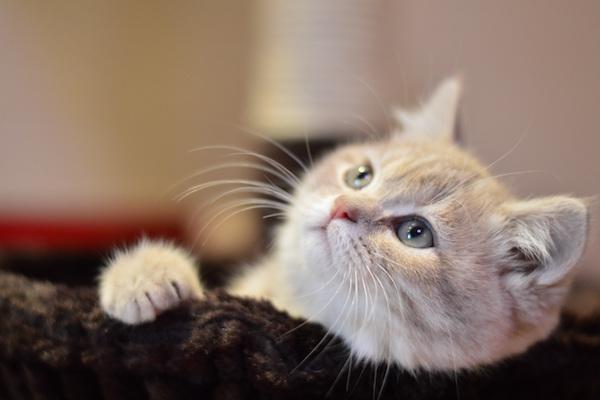 誰からも愛されるネコ顔には、小悪魔的な魅力も。