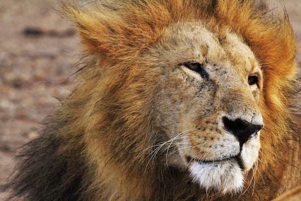 バラエティー司会者に「ライオン顔」が多い理由 -どうぶつ顔で診断-