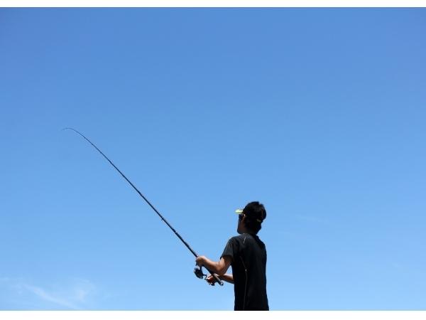 釣られた魚